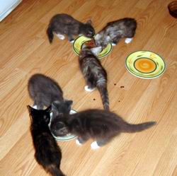 Waterfordwest Kittens